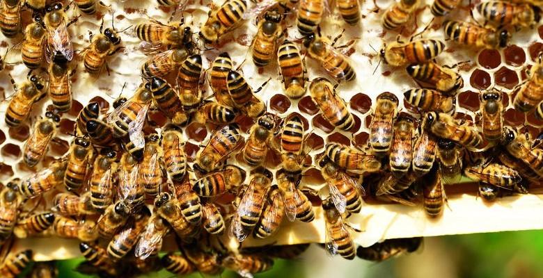 Mialet : les sapeurs-pompiers interviennent pour protéger les abeilles